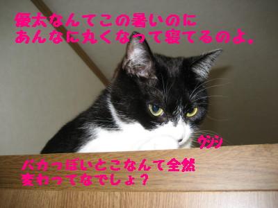 IMG_0304.jpg