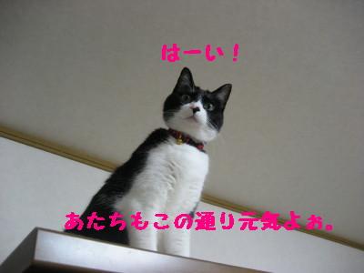 IMG_0346.jpg
