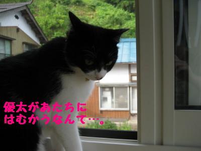 IMG_0390.jpg