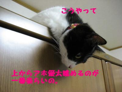 IMG_0449.jpg