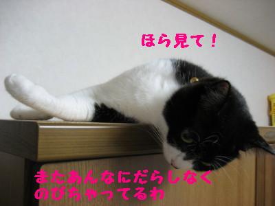 IMG_0453.jpg