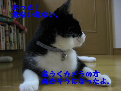 IMG_0480.jpg