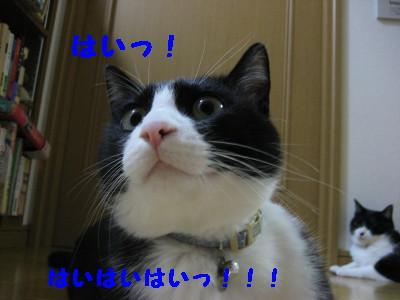 IMG_0484.jpg