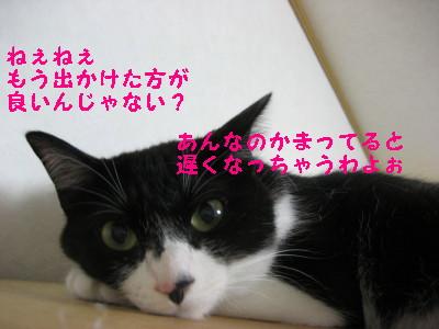 IMG_1010.jpg