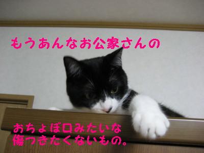 IMG_1051.jpg