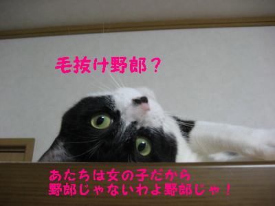 IMG_1059.jpg