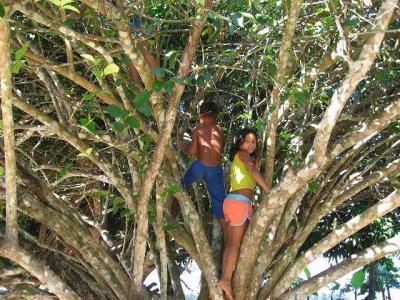 するするっと木に登ります