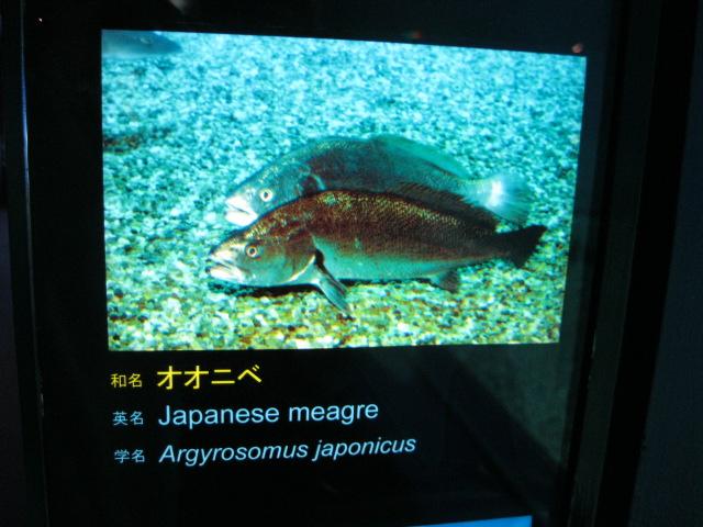 海遊館♪39