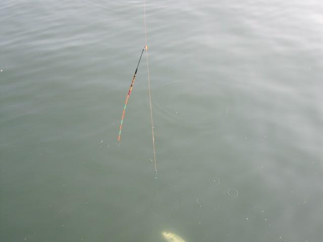 水中に銀色のお魚が(^^)v