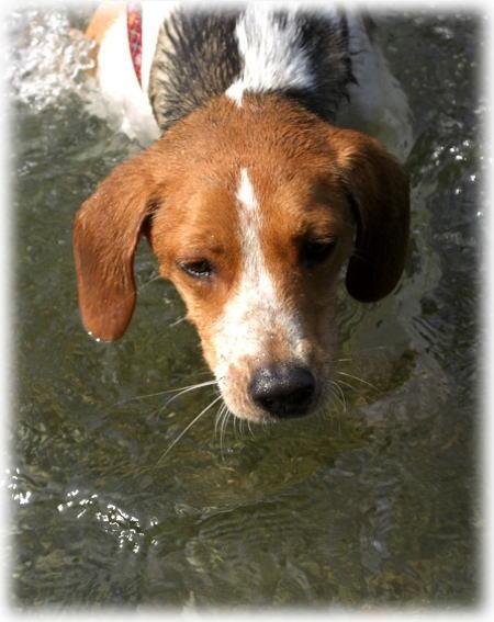 泳げるよ~。2