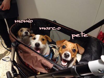 momo,marco,pete