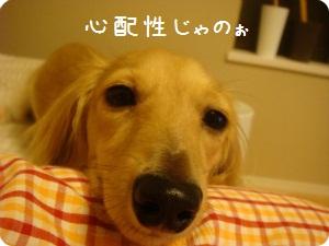 016_20110804150437.jpg