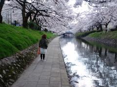 sakura_convert_20090406181218[1]