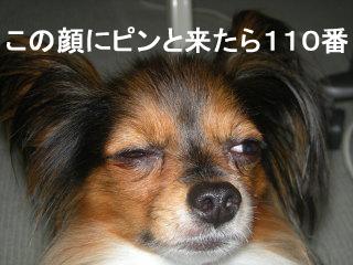 画像2 0014