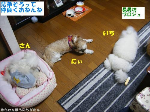 all5.jpg