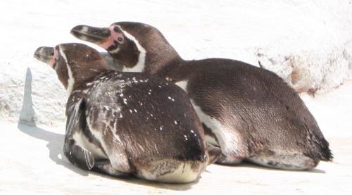 ペンギン_convert_20090705010150