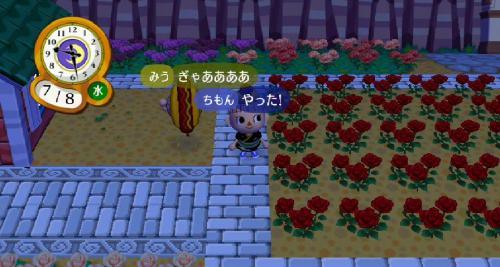 RUU_0916_convert_20090716102710.jpg