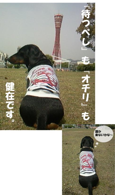 2_20110412021921.jpg
