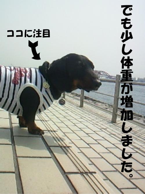3_20110412021920.jpg