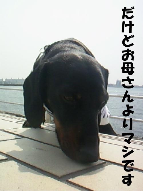 4_20110412021920.jpg