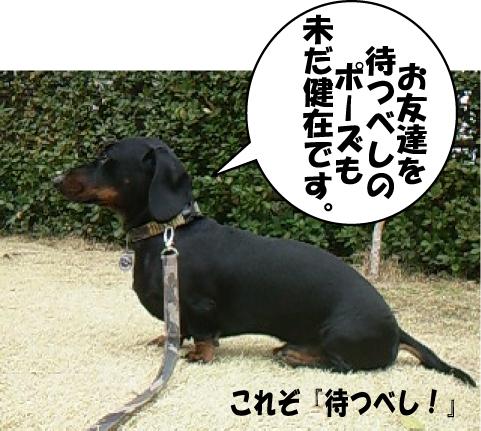 5_20110301114402.jpg