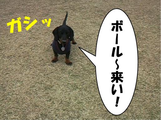 7_20110301115406.jpg