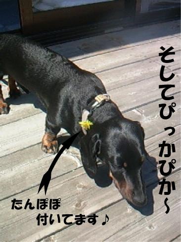 7_20110412022628.jpg