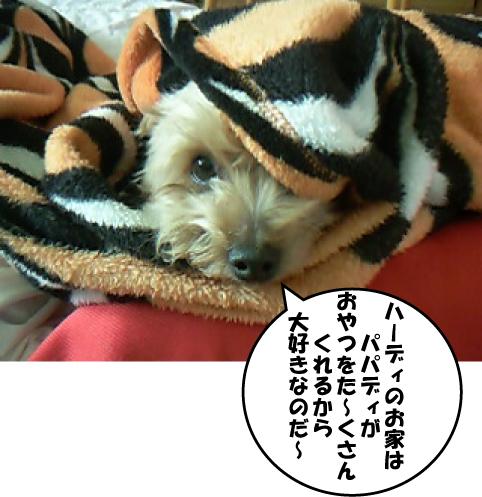 8_20110207170042.jpg