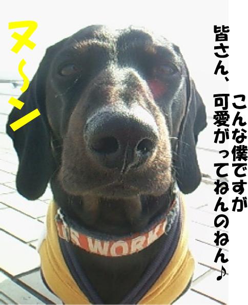 8_20110301115406.jpg
