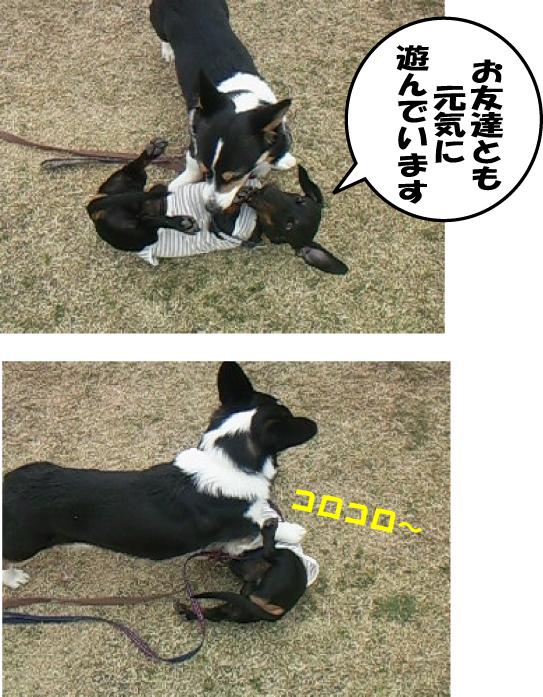 9_20110301121248.jpg