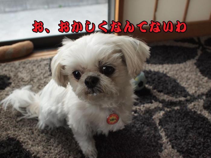 001_20110328172218.jpg