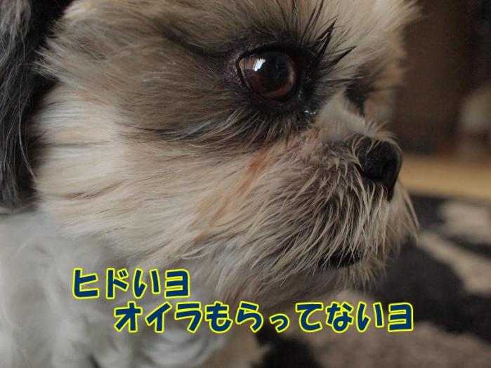 008_20110328172216.jpg