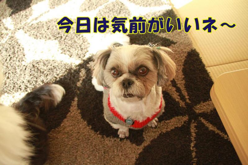 010_20110128144018.jpg
