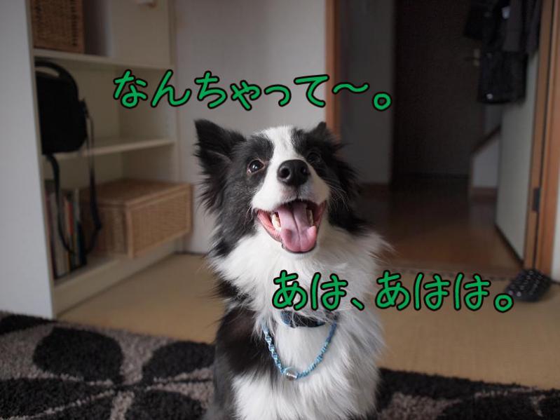 011_20110127183028.jpg