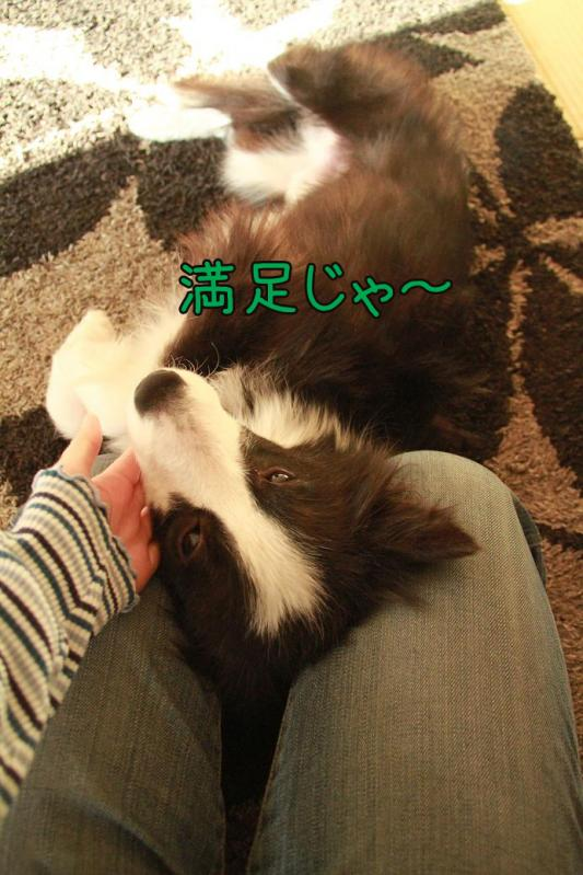 015_20110128144031.jpg