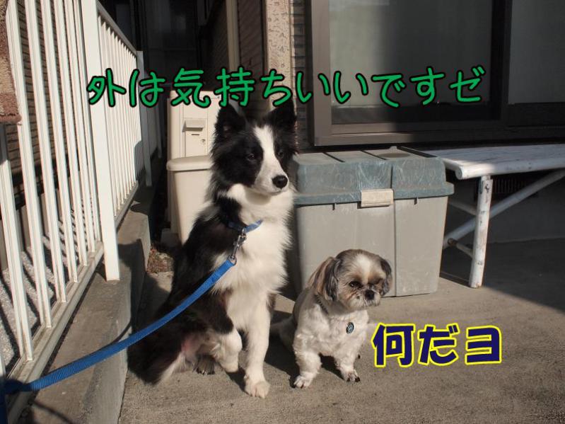 020_20110207213703.jpg