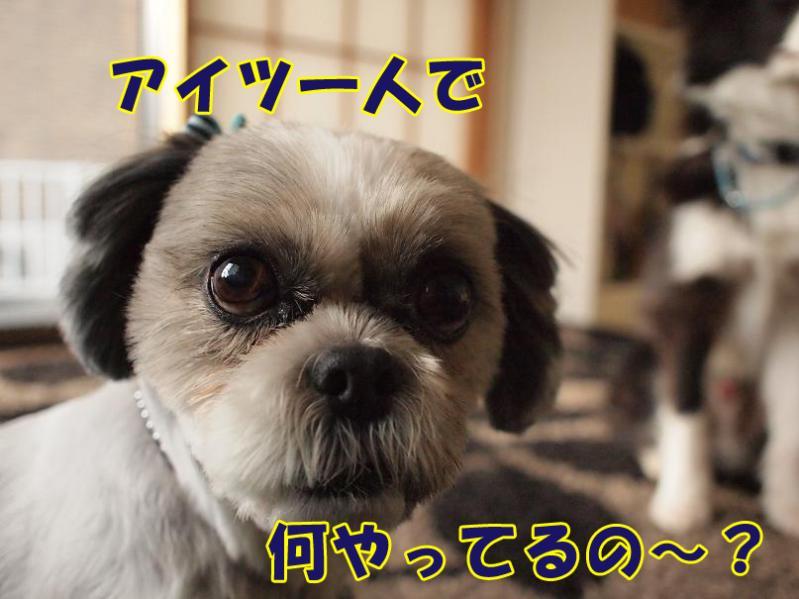 025_20110127183027.jpg