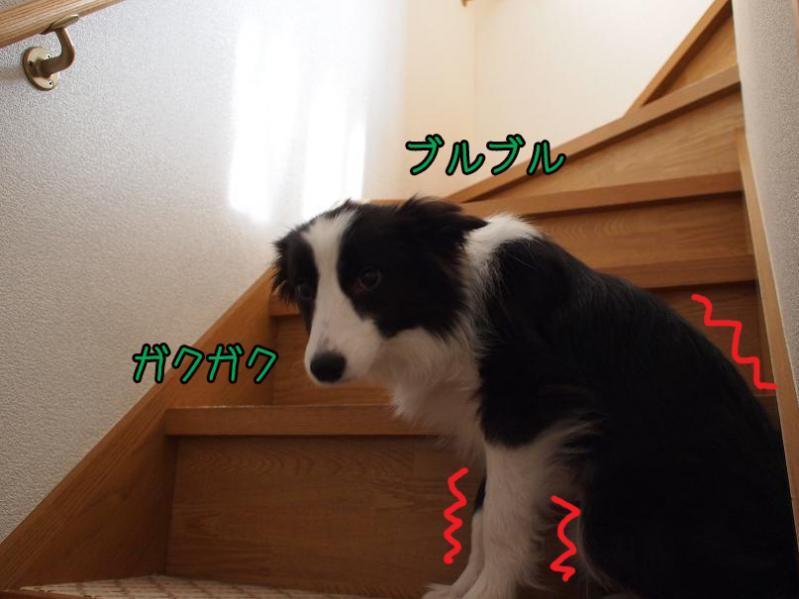 033_20110207213701.jpg