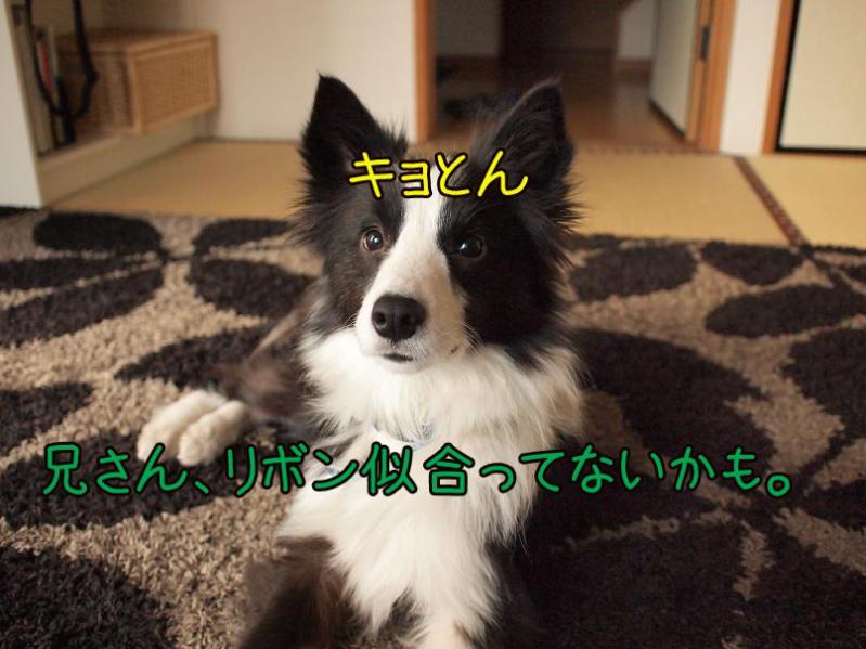 036_20110127183051.jpg