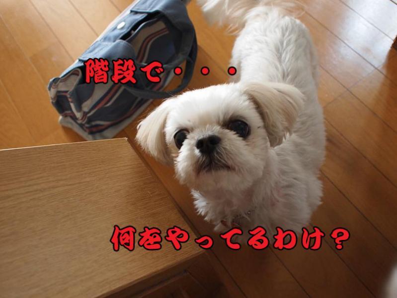 037_20110207213721.jpg