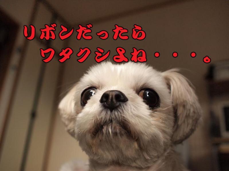 041_20110127183050.jpg