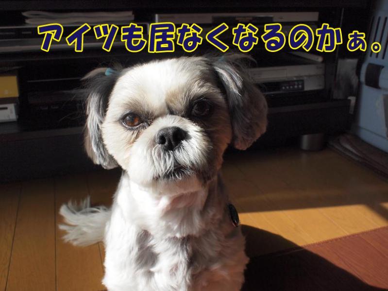 048_20110130190453.jpg