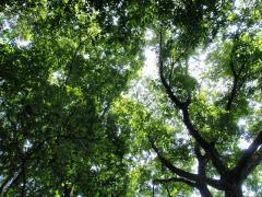 木陰には気持ちいい風が吹いてます