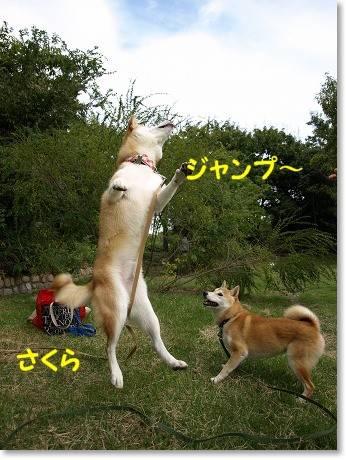 ジャンピングキャッチ!