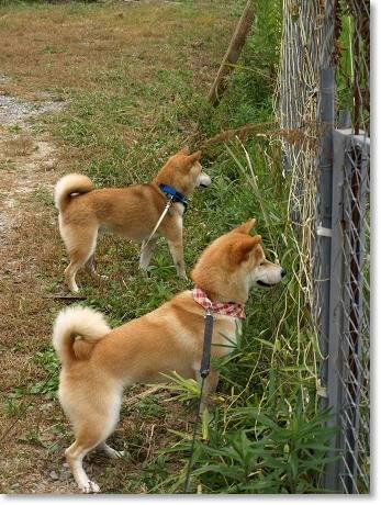 フェンスを覗く!