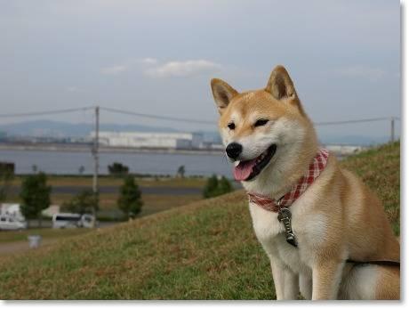 大阪湾が見えるの~