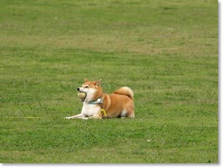 芝生で~りきまるくん~