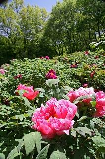 2009.4.27 039井頭公園