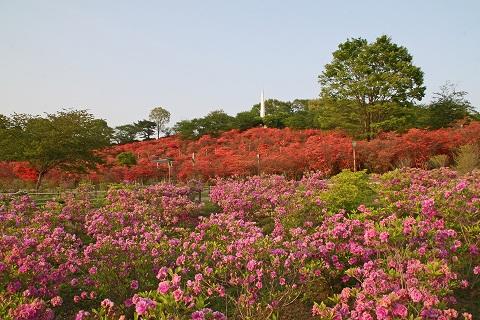 2009.5.1 168長峰公園夕方