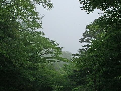 2009.58雨上がりの尚仁沢 013